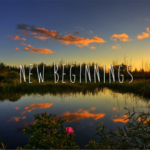A NEW BEGINNING – WELCOME TO HEN – THE BLOG!